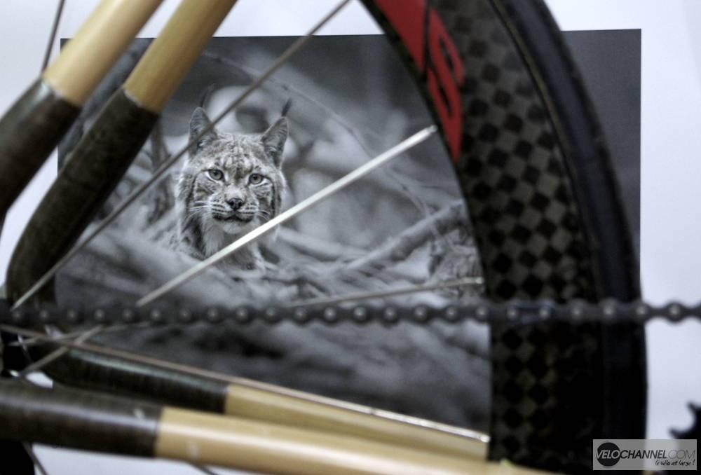 photo de lynx sur un calendrier derrière un vélo en bambou