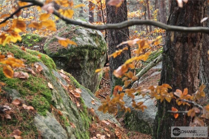 foret-fontainebleau-automne
