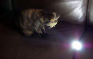 chat jouant avec un éclairage fabric FL30